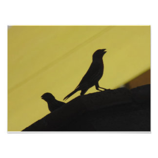 Finches are fierce! photographic print