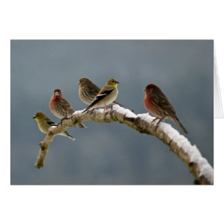 Finches Christmas card