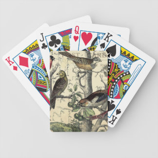 Finches Looking Bicycle Playing Cards