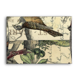 Finches Looking Envelopes