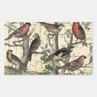 Finches Looking Rectangular Sticker