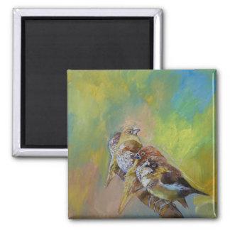 Finches Fridge Magnets