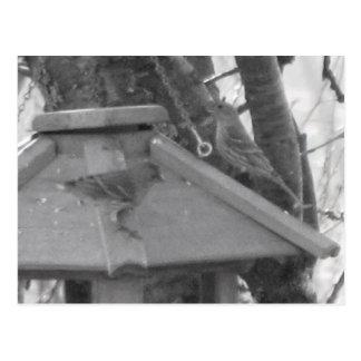 Finches on Birdfeeder Postcard