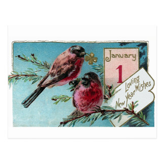 Finches on Pine Tree Vintage New Year Postcard