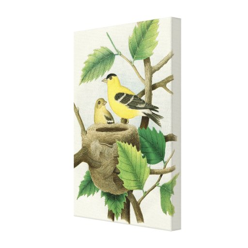 Finches with Nest Gallery Wrap Canvas