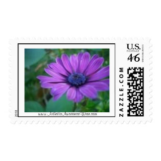 Find the beauty in life postage stamp