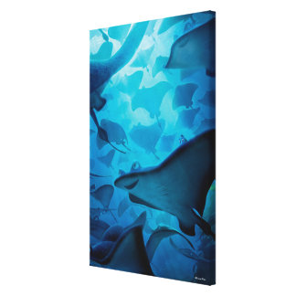 Finding Dory | Hide and Seek - Rays Canvas Print