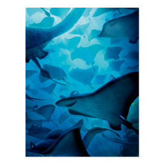 Finding Dory | Hide and Seek - Rays Postcard