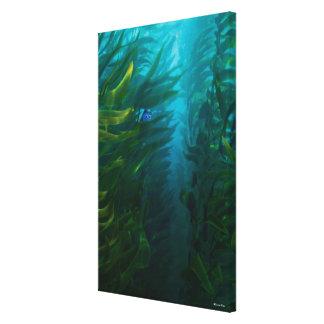 finding dory hide and seek sea kelp canvas print