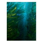 Finding Dory   Hide and Seek - Sea Kelp Postcard