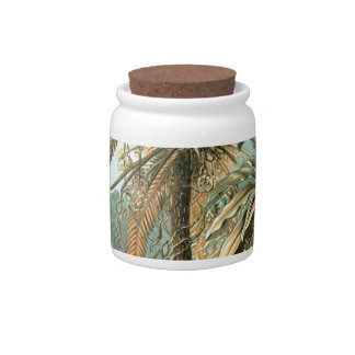 Fine Art Fern - Art Forms of Nature Candy Jars