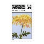 Fine Art & Nature Postage Sun-kissed Chrysanthemum