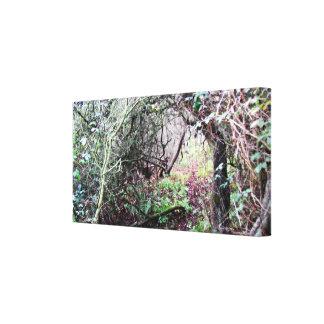 Fine Art Photo Canvas Secret Path Canvas Print