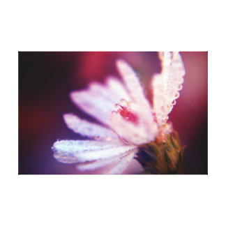 Fine Art Photography - Foral Dewdrops Canvas Prints