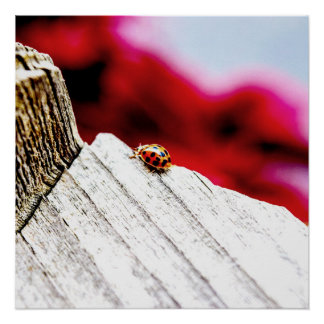 Fine Art Photography Lucky Lady Bug Perfect Poste Poster