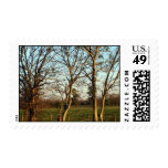 Fine Art Photography Postage Stamps