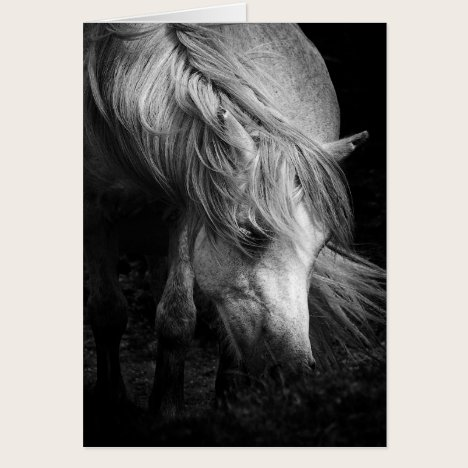 Fine Art Pony Head and Mane blank notelet / card
