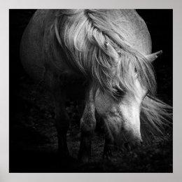 Fine Art Pony Head and Mane poster print / canvas print