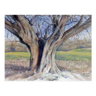 Fine Art Postcard- Ancient English Tree Postcard