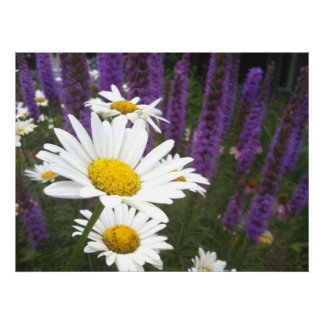 Fine Art Print: Daisies and Gayfeather, White, Pur