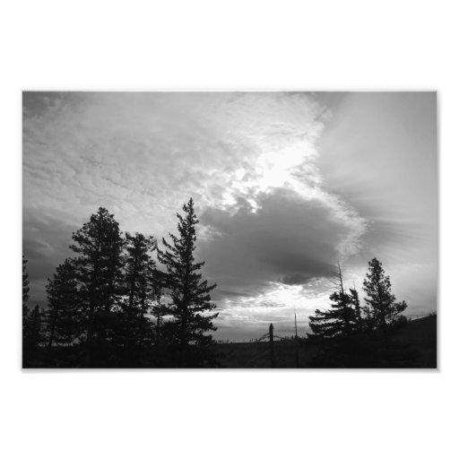Fine Art Print of Santiam Pass Pines Photo Print