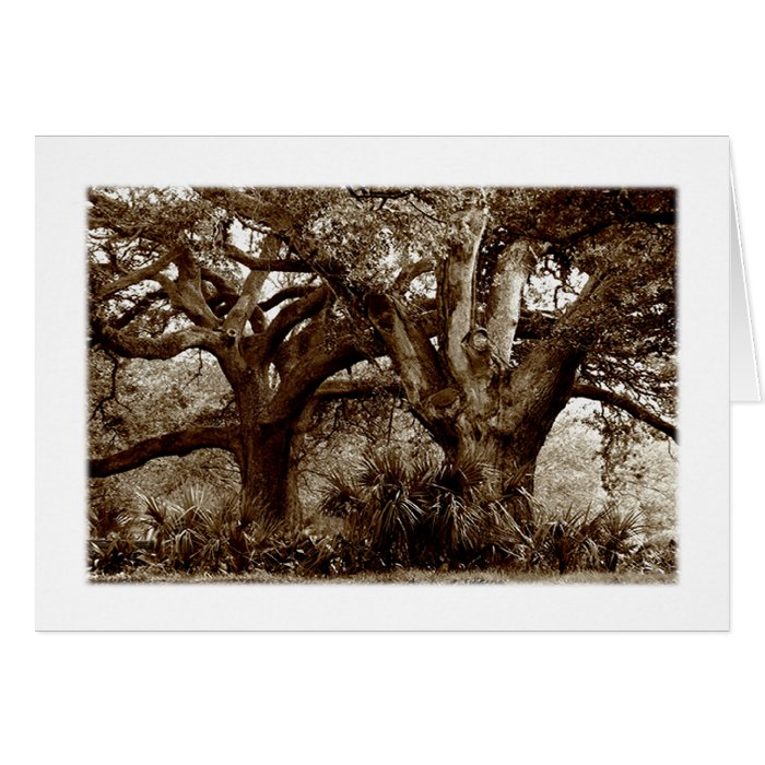 Fine Art Two Southern Live Oaks Card