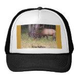 fine fellow elk hat