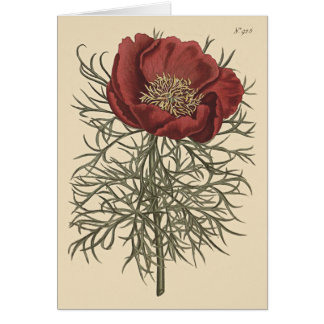 Fine Leaved Peony Botanical Illustration Card