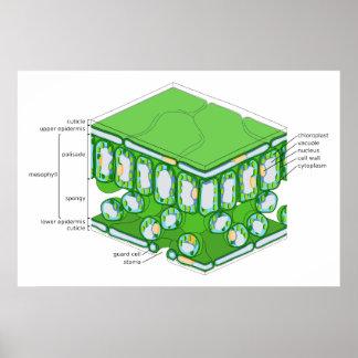 Fine Scale Structure of a Leaf Diagram Print