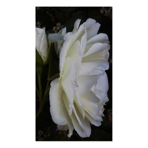 finest white rose business card