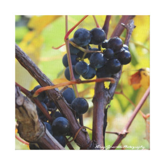 Finger Lakes Wine Country Grapes on Canvas