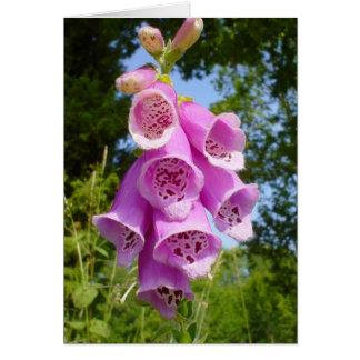 Finger Purple Flower In Field Cards