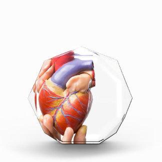 Fingers showing model human heart on white.jpg acrylic award
