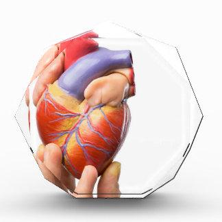 Fingers showing model human heart on white.jpg award