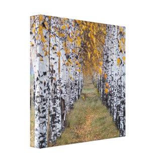 Finland Birch Forest Canvas Prints