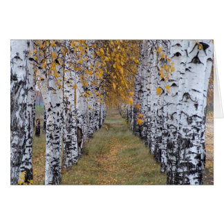 Finland Birch Forest Card