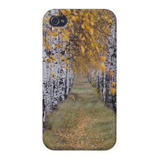 Finland Birch Forest iPhone 4 Covers