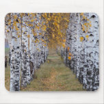 Finland Birch Forest Mouse Pad