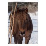 Finnhorse en invierno tarjeton