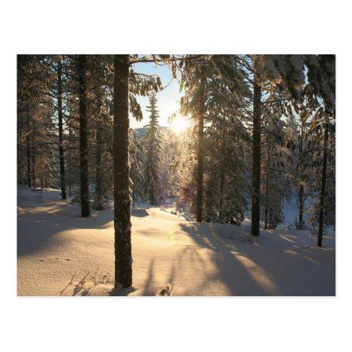 Finnisch Forest Postcard
