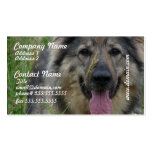 Finnish Lapphund Business Cards