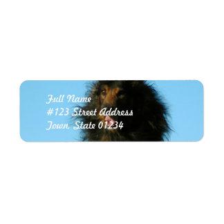 Finnish Lapphund Dog Mailing Labels