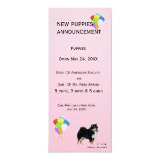 Finnish Lapphund New Puppy Announcement