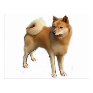 Finnish Spitz dog Postcard