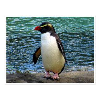 fiordland penguin postcard