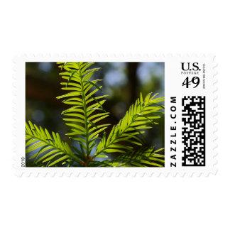 Fir Needle Christmas Holiday Custom Postage Stamp