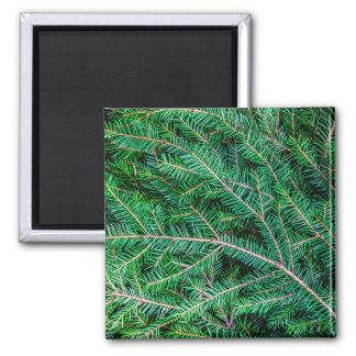 Fir tree branch refrigerator magnet