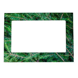 Fir tree branch magnetic photo frames