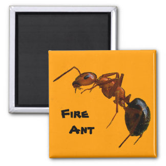 Fire Ant 2 Inch Square Magnet