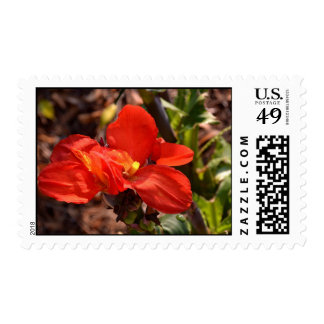 Fire Colored Flower Postage